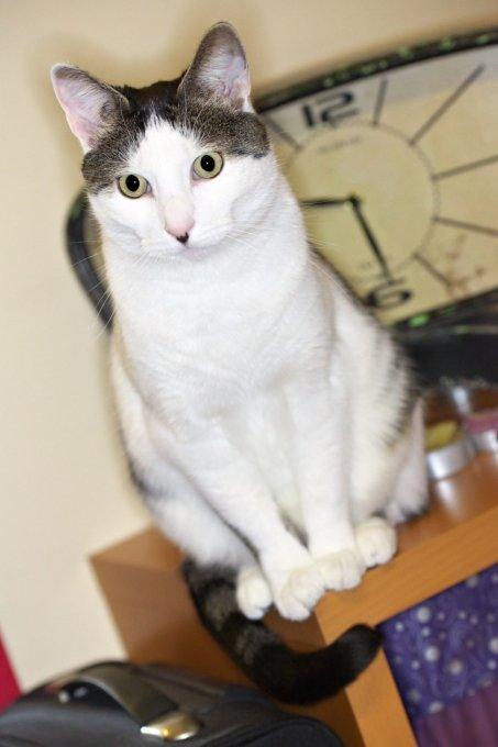 Sitzende Katze mit Aputure Makroring Blitz aufgenommen.